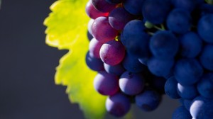 grapes-fruit-up-close-wallpaper-1846-1942-hd-wallpapers